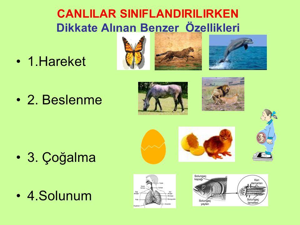 Neden Sınıflandırma? •D•Dünyada bir buçuk milyon canlı türü tanımlanmıştır. •A•Ancak bilim insanları on milyon civarında canlı türü olduğunu düşünmekt