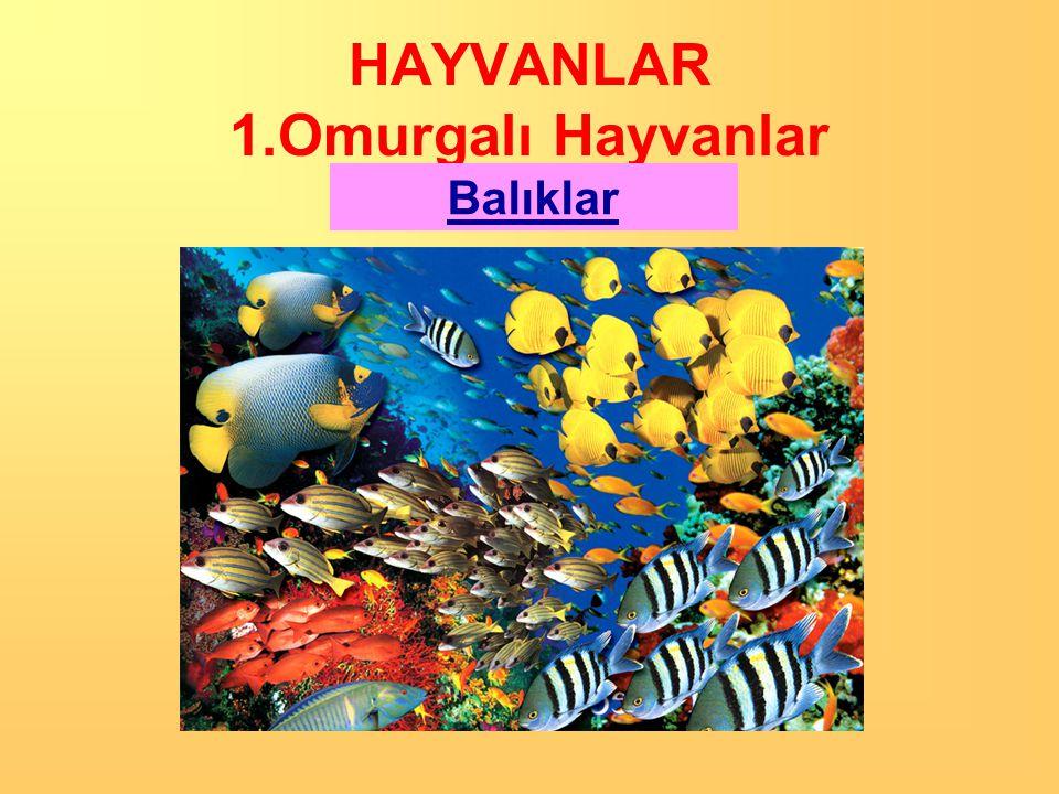 HAYVANLAR 1.Omurgalı Hayvanlar Beş grupta incelenir: 1. Balıklar 2. Kurbağalar 3. Sürüngenler 4. Kuşlar 5. Memeliler