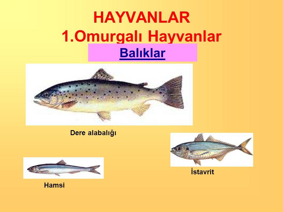 HAYVANLAR 1.Omurgalı Hayvanlar Balıklar