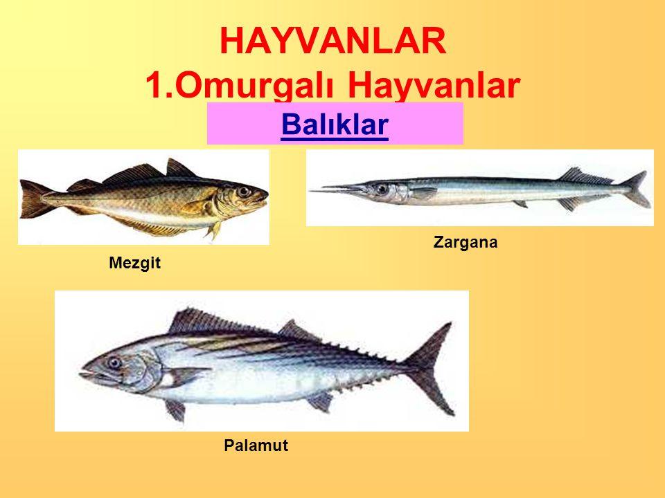 Balıklar Dere alabalığı Hamsi İstavrit