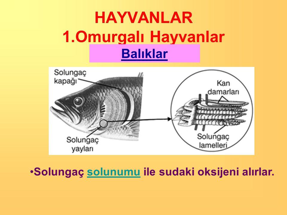 HAYVANLAR 1.Omurgalı Hayvanlar Balıklar •Yumurtayla çoğalırlar.