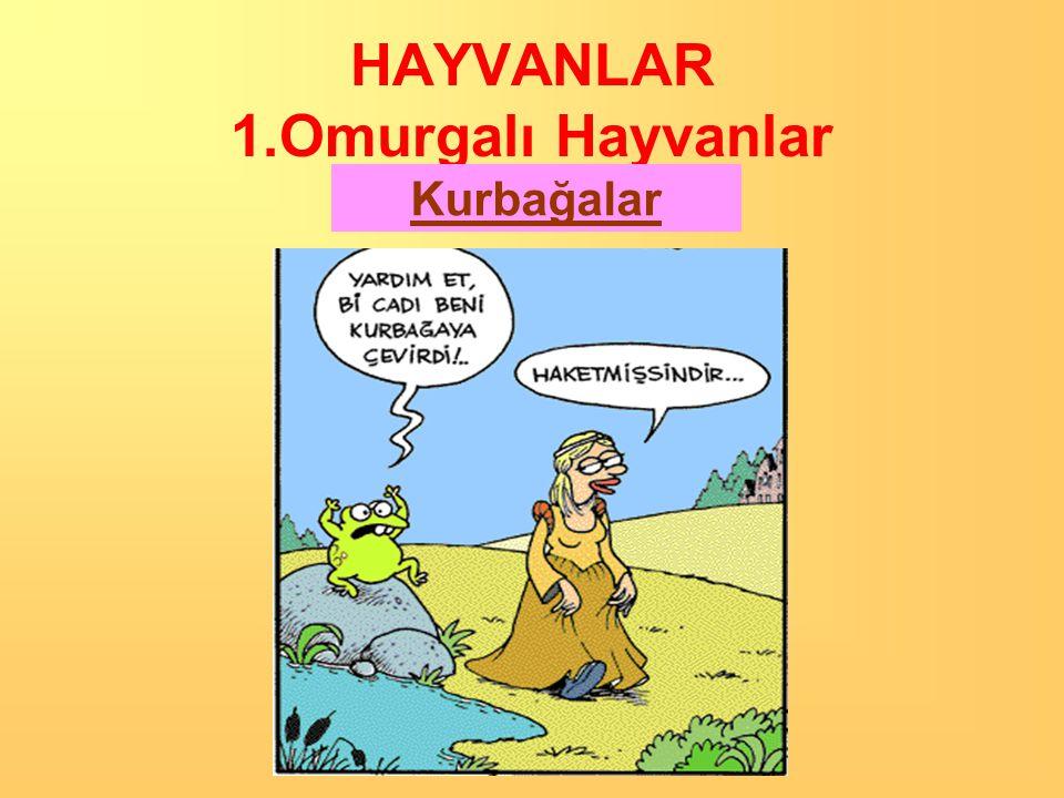 HAYVANLAR 1.Omurgalı Hayvanlar Balıklar •Solungaç solunumu ile sudaki oksijeni alırlar.solunumu