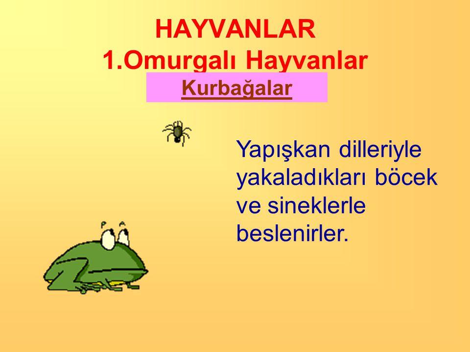HAYVANLAR 1.Omurgalı Hayvanlar Kurbağalar Nemli yerlerde (akarsu ve göl kenarlarında) yaşarlar. Çünkü Erginleri akciğer solunumunun yanında deri solun