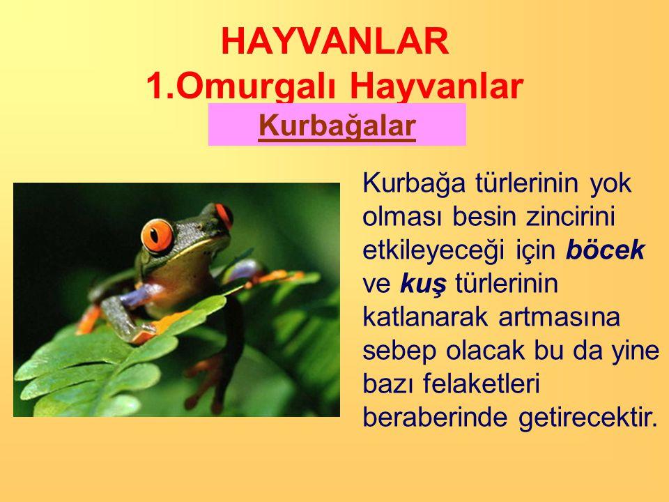 HAYVANLAR 1.Omurgalı Hayvanlar Kurbağalar İribaş Kelebek,kurbağa gibi bazı hayvanların yumurtadan çıktıktan sonra yapısal değişikliklere uğrayarak ana