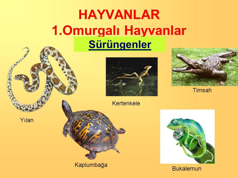 HAYVANLAR 1.Omurgalı Hayvanlar Sürüngenler Kertenkele