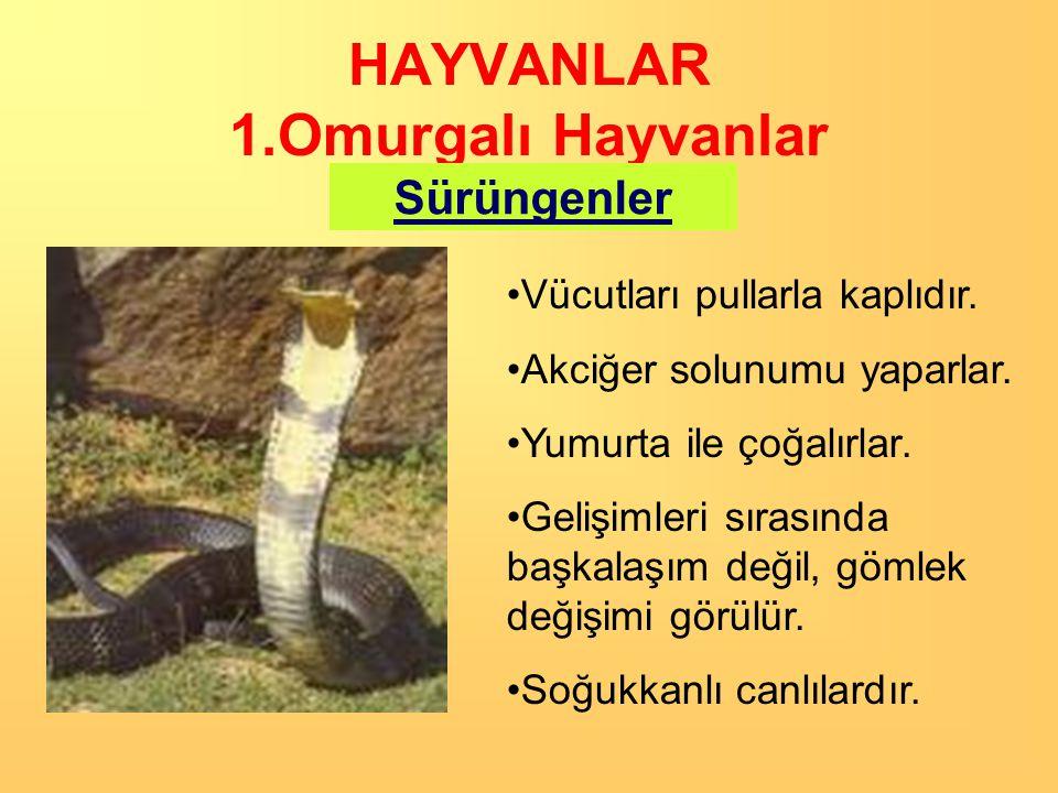 HAYVANLAR 1.Omurgalı Hayvanlar Sürüngenler