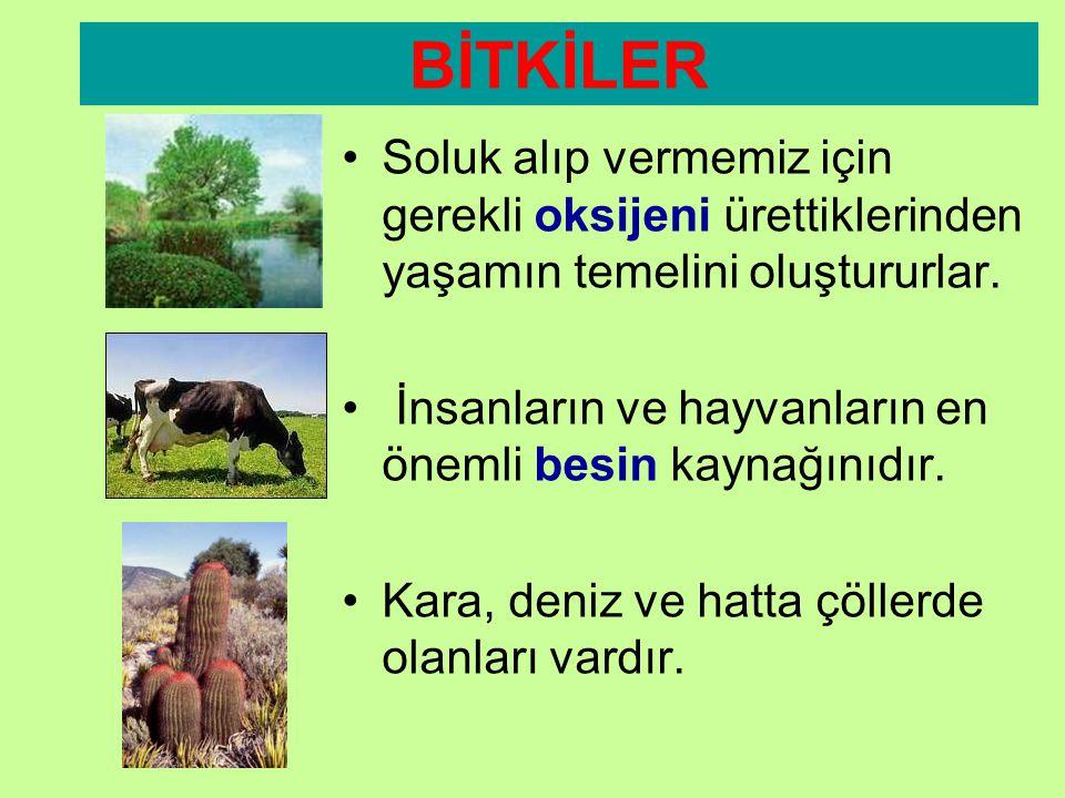 CANLILAR DÖRDE AYRILIR •1. Bitkiler •2. Hayvanlar •3. Mantarlar •4. Mikroskobik Canlılar