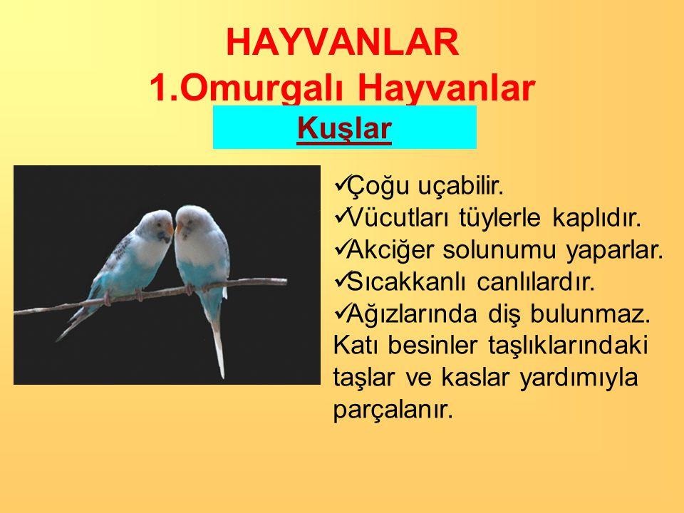HAYVANLAR 1.Omurgalı Hayvanlar Kuşlar KUŞ GRİBİ: Kuşlardan insanlara bulaşan öldürücü bir hastalık.