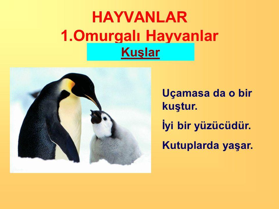 HAYVANLAR 1.Omurgalı Hayvanlar Kuşlar Yumurta ile çoğalırlar. Yavrularına bakarlar.