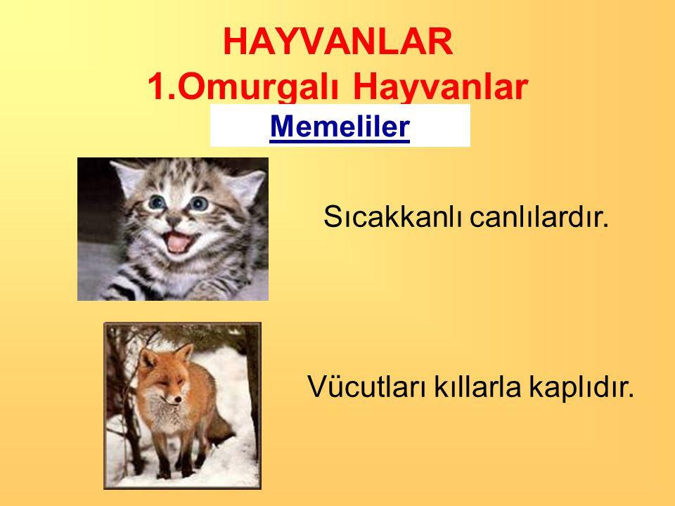 HAYVANLAR 1.Omurgalı Hayvanlar Memeliler