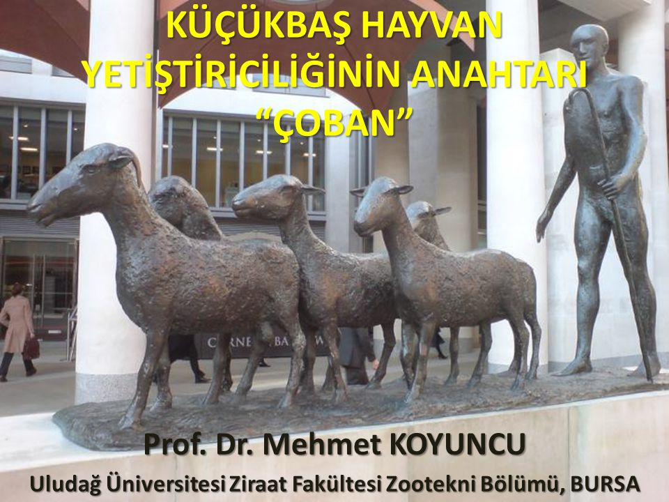 Türkiye'nin farklı illerinde Gıda Tarım ve Hayvancılık Bakanlığı öncülüğünde yürütülen küçükbaş hayvan ıslahı projeleri kapsamında esas unsurlardan birinin de çoban olduğu felsefesi iyi kavranmalıdır.