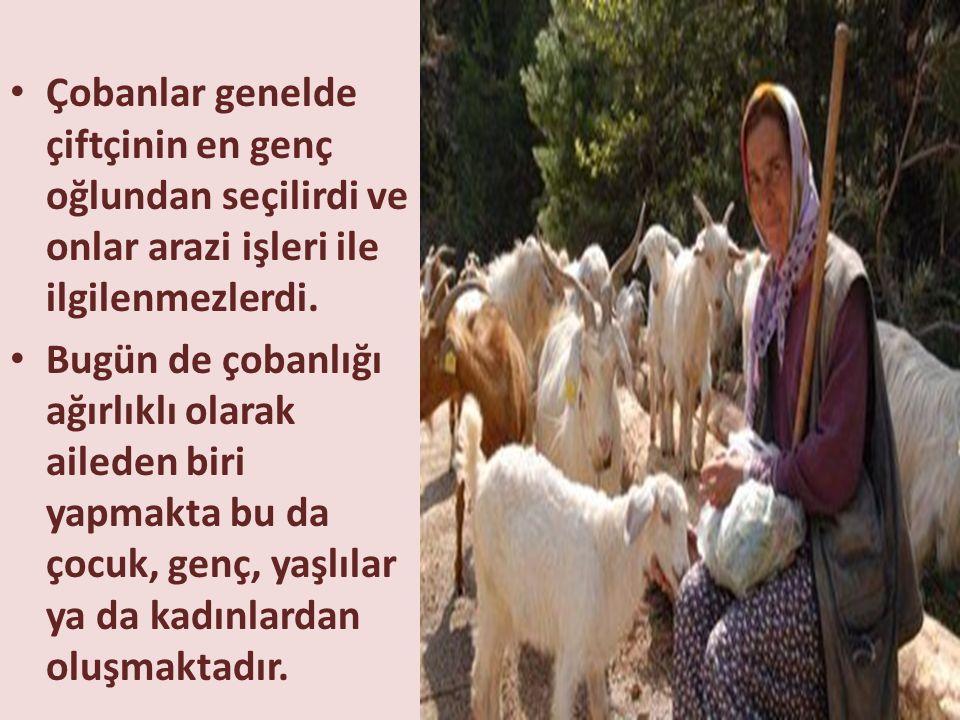 • Çobanlar genelde çiftçinin en genç oğlundan seçilirdi ve onlar arazi işleri ile ilgilenmezlerdi. • Bugün de çobanlığı ağırlıklı olarak aileden biri