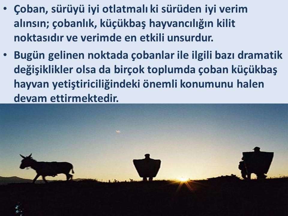 • Çoban, sürüyü iyi otlatmalı ki sürüden iyi verim alınsın; çobanlık, küçükbaş hayvancılığın kilit noktasıdır ve verimde en etkili unsurdur. • Bugün g