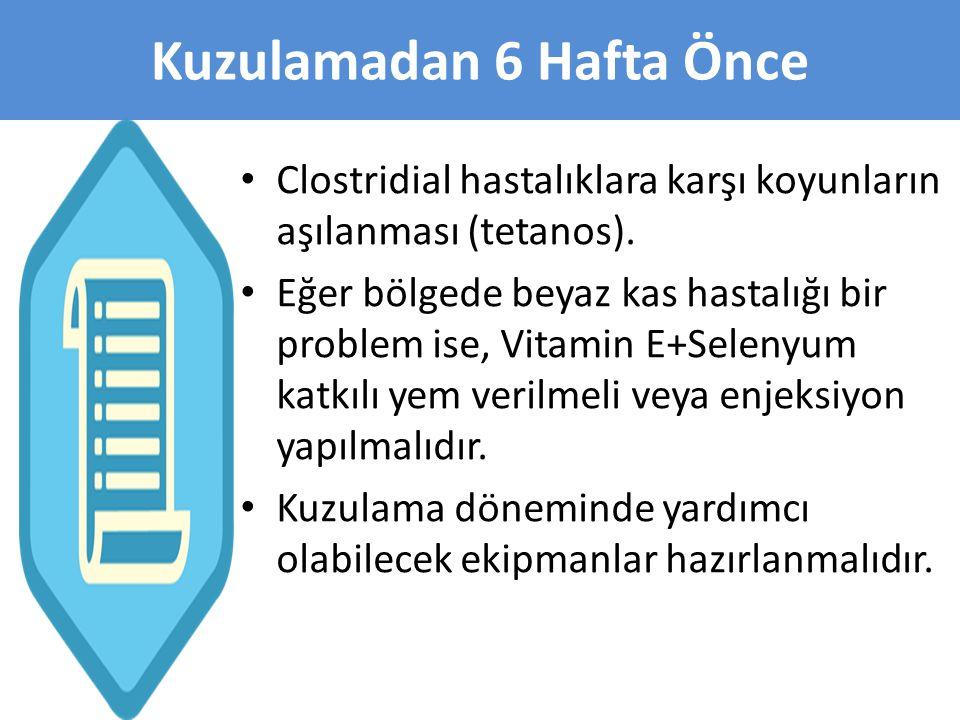 • Clostridial hastalıklara karşı koyunların aşılanması (tetanos). • Eğer bölgede beyaz kas hastalığı bir problem ise, Vitamin E+Selenyum katkılı yem v