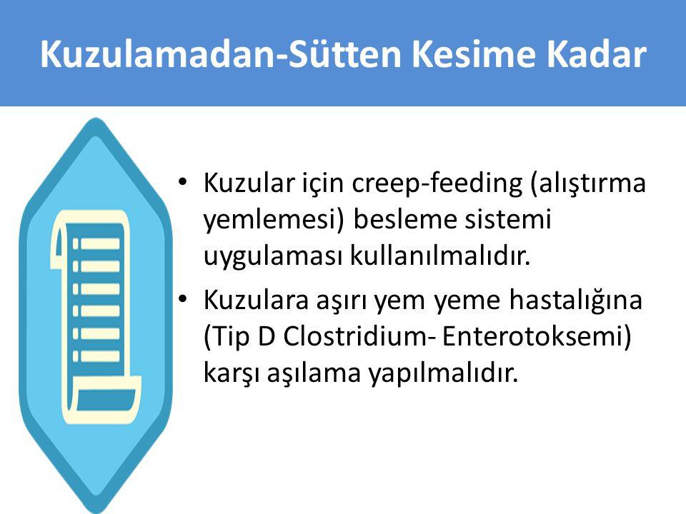 • Kuzular için creep-feeding (alıştırma yemlemesi) besleme sistemi uygulaması kullanılmalıdır. • Kuzulara aşırı yem yeme hastalığına (Tip D Clostridiu