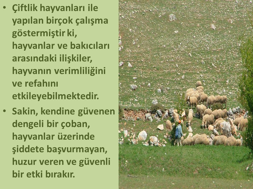 • Çiftlik hayvanları ile yapılan birçok çalışma göstermiştir ki, hayvanlar ve bakıcıları arasındaki ilişkiler, hayvanın verimliliğini ve refahını etki