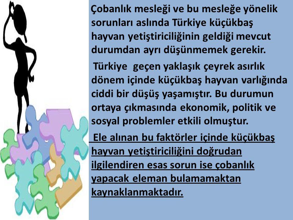 Çobanlık mesleği ve bu mesleğe yönelik sorunları aslında Türkiye küçükbaş hayvan yetiştiriciliğinin geldiği mevcut durumdan ayrı düşünmemek gerekir. T