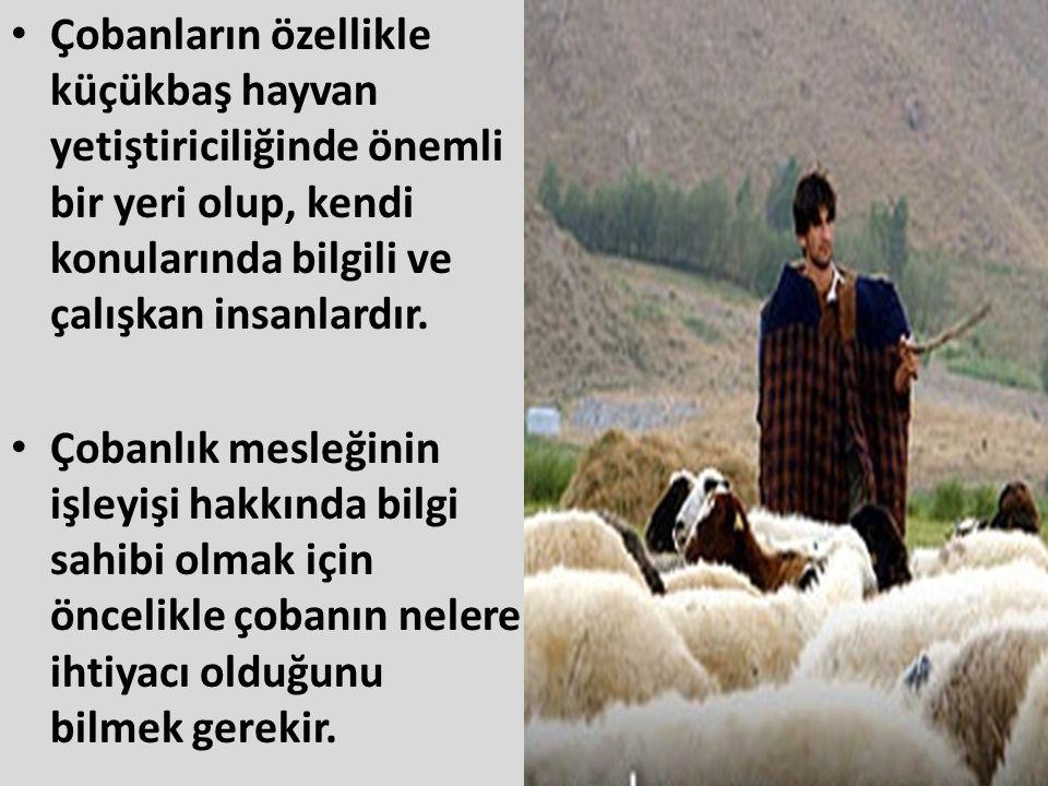 • Çobanların özellikle küçükbaş hayvan yetiştiriciliğinde önemli bir yeri olup, kendi konularında bilgili ve çalışkan insanlardır. • Çobanlık mesleğin