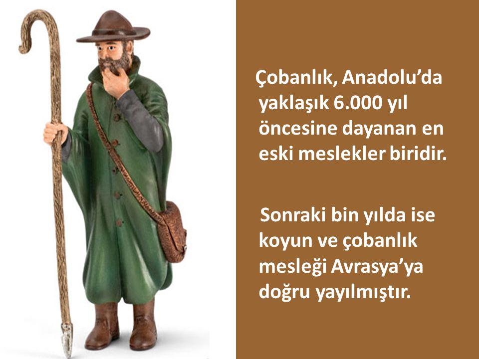 Çobanlık, Anadolu'da yaklaşık 6.000 yıl öncesine dayanan en eski meslekler biridir. Sonraki bin yılda ise koyun ve çobanlık mesleği Avrasya'ya doğru y