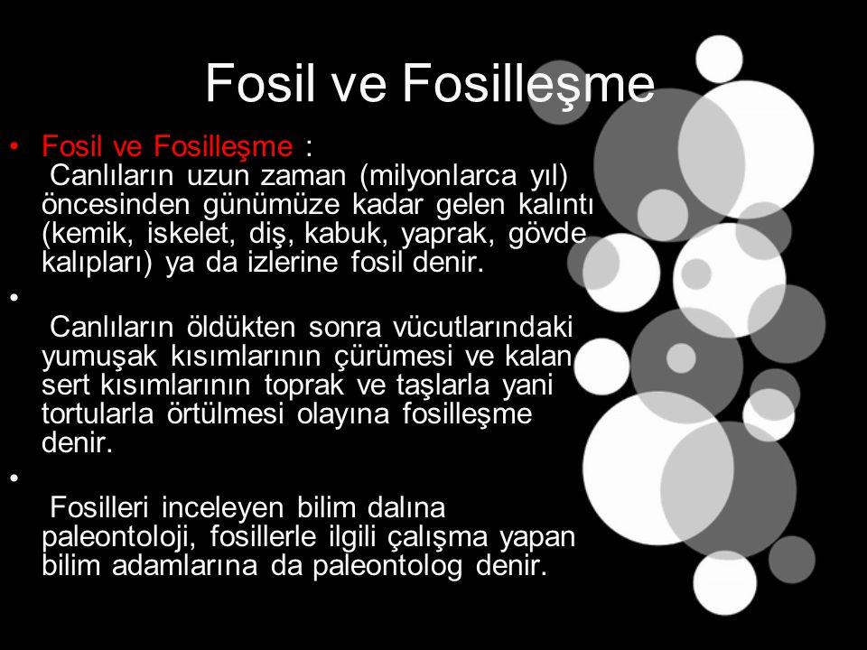 Fosil ve Fosilleşme Fosiller Hakkında Bilgi