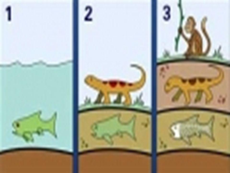 Fosillerin Oluşması Ölen canlılar doğada, yer kabuğundaki tortul kayaçlarda korunurlar. Canlı öldükten sonra bu canlının üzeri nehirler, akıntılar, rü