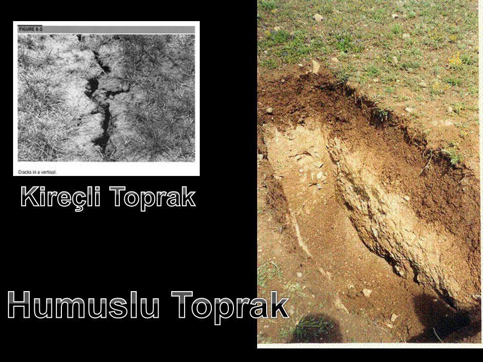 Toprak Çeşitleri(3) •Tarım için en elverişli topraktır. Toprağın yapısında humus (canlı kalıntıları ) arttıkça toprak zenginleşir. • 4)Killi toprak: A