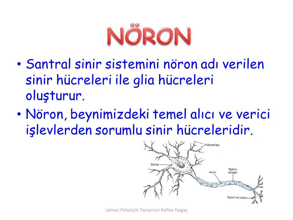 Uzman Psikolojik Danışman Refika Yazgaç • Santral sinir sistemini nöron adı verilen sinir hücreleri ile glia hücreleri oluşturur. • Nöron, beynimizdek