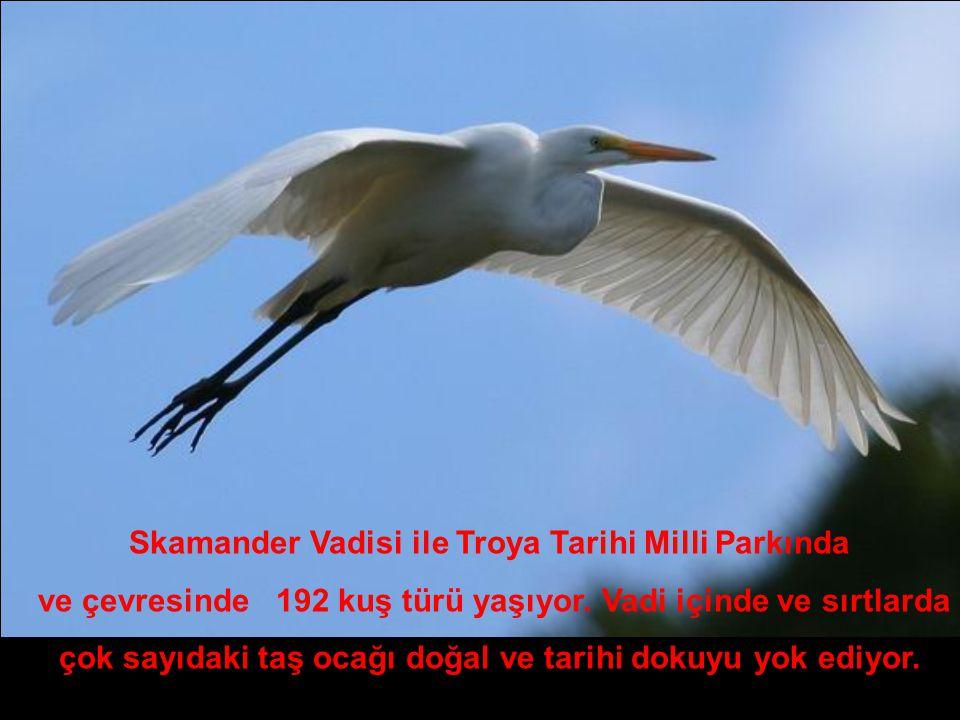 Skamander Vadisi ile Troya Tarihi Milli Parkında ve çevresinde 192 kuş türü yaşıyor.