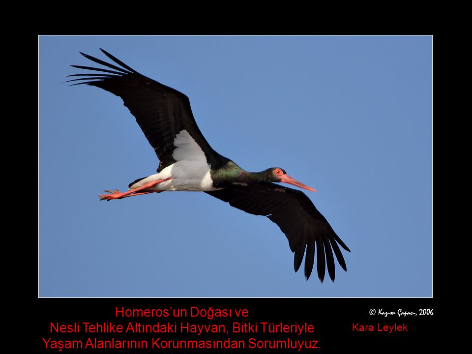Skamander Vadisi ile Troya Tarihi Milli Parkında ve çevresinde 192 kuş türü yaşıyor. Vadi içinde ve sırtlarda çok sayıdaki taş ocağı doğal ve tarihi d