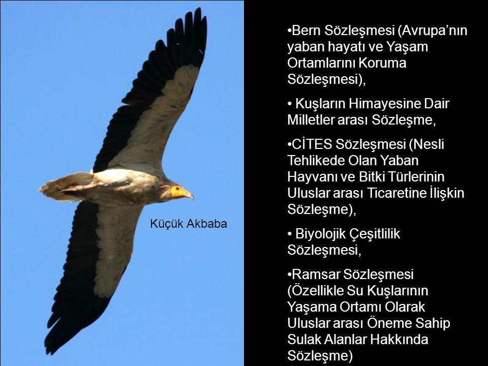 •Bern Sözleşmesi (Avrupa'nın yaban hayatı ve Yaşam Ortamlarını Koruma Sözleşmesi), • Kuşların Himayesine Dair Milletler arası Sözleşme, •CİTES Sözleşmesi (Nesli Tehlikede Olan Yaban Hayvanı ve Bitki Türlerinin Uluslar arası Ticaretine İlişkin Sözleşme), • Biyolojik Çeşitlilik Sözleşmesi, •Ramsar Sözleşmesi (Özellikle Su Kuşlarının Yaşama Ortamı Olarak Uluslar arası Öneme Sahip Sulak Alanlar Hakkında Sözleşme) Küçük Akbaba