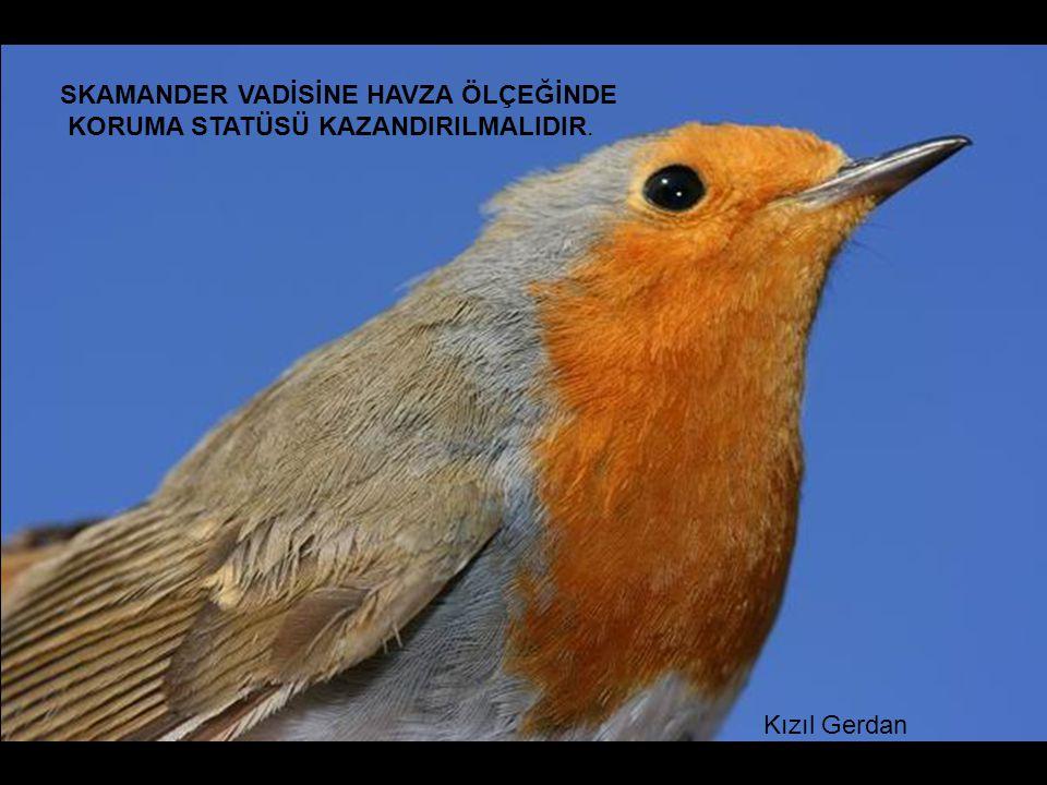 Kızıl Gerdan SKAMANDER VADİSİNE HAVZA ÖLÇEĞİNDE KORUMA STATÜSÜ KAZANDIRILMALIDIR.