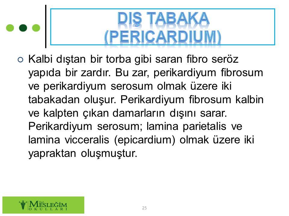 ○ Kalbi dıştan bir torba gibi saran fibro seröz yapıda bir zardır. Bu zar, perikardiyum fibrosum ve perikardiyum serosum olmak üzere iki tabakadan olu