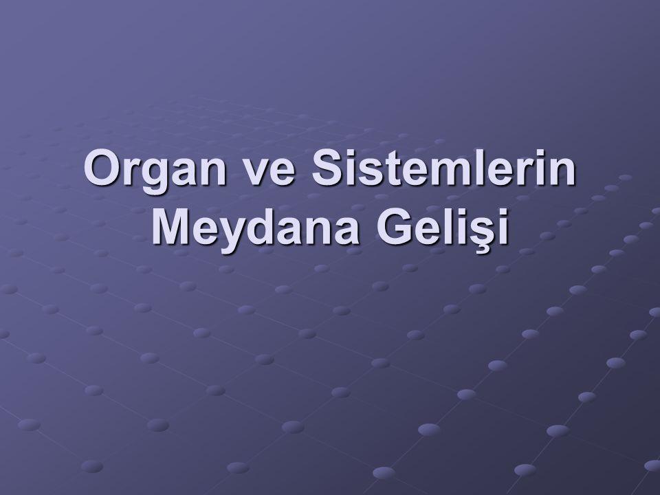 Koku alma organının oluşması: Bu organ ektodrmden gelişir.