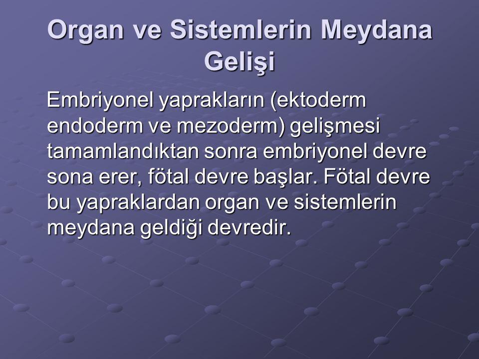 Embriyonel yaprakların (ektoderm endoderm ve mezoderm) gelişmesi tamamlandıktan sonra embriyonel devre sona erer, fötal devre başlar.