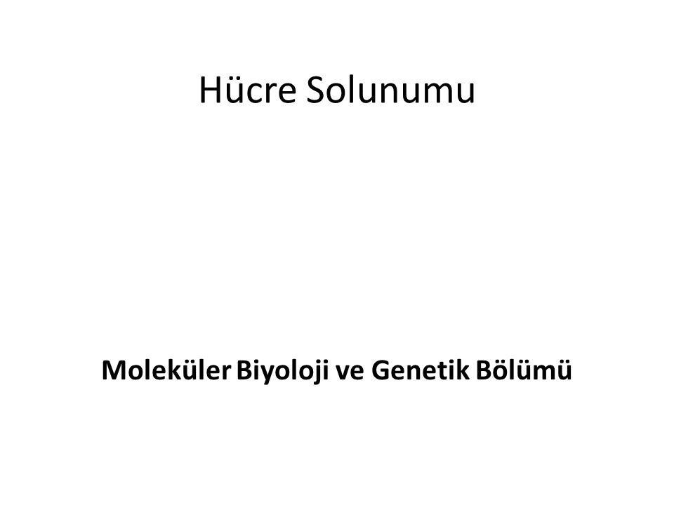 Hücre Solunumu Moleküler Biyoloji ve Genetik Bölümü