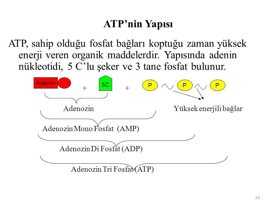14 ATP'nin Yapısı ATP, sahip olduğu fosfat bağları koptuğu zaman yüksek enerji veren organik maddelerdir.