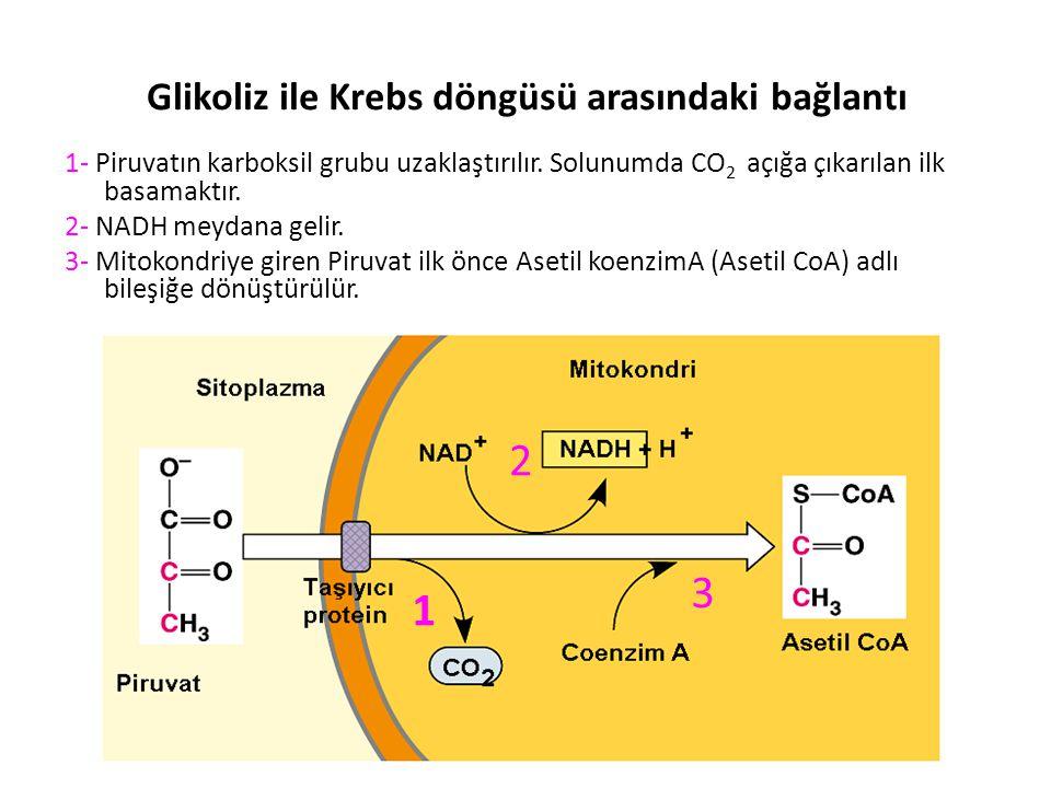 Glikoliz ile Krebs döngüsü arasındaki bağlantı 1- Piruvatın karboksil grubu uzaklaştırılır.