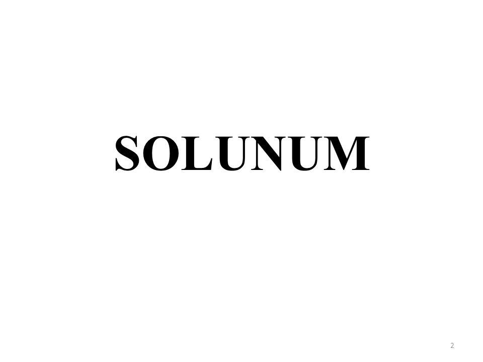 2 SOLUNUM