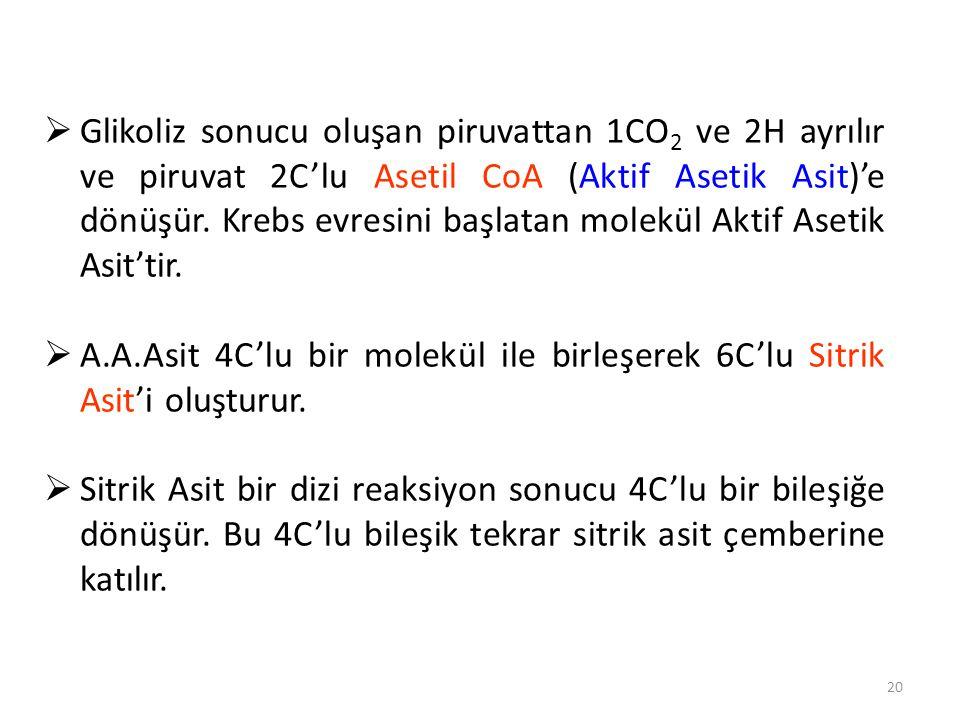 20  Glikoliz sonucu oluşan piruvattan 1CO 2 ve 2H ayrılır ve piruvat 2C'lu Asetil CoA (Aktif Asetik Asit)'e dönüşür.