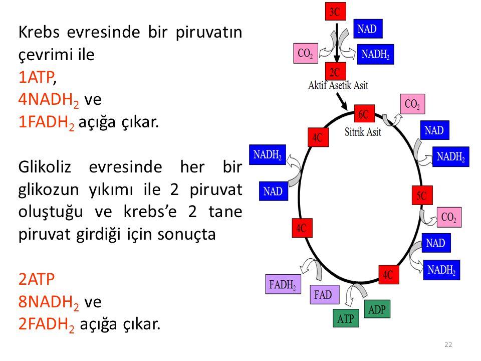 22 Krebs evresinde bir piruvatın çevrimi ile 1ATP, 4NADH 2 ve 1FADH 2 açığa çıkar.