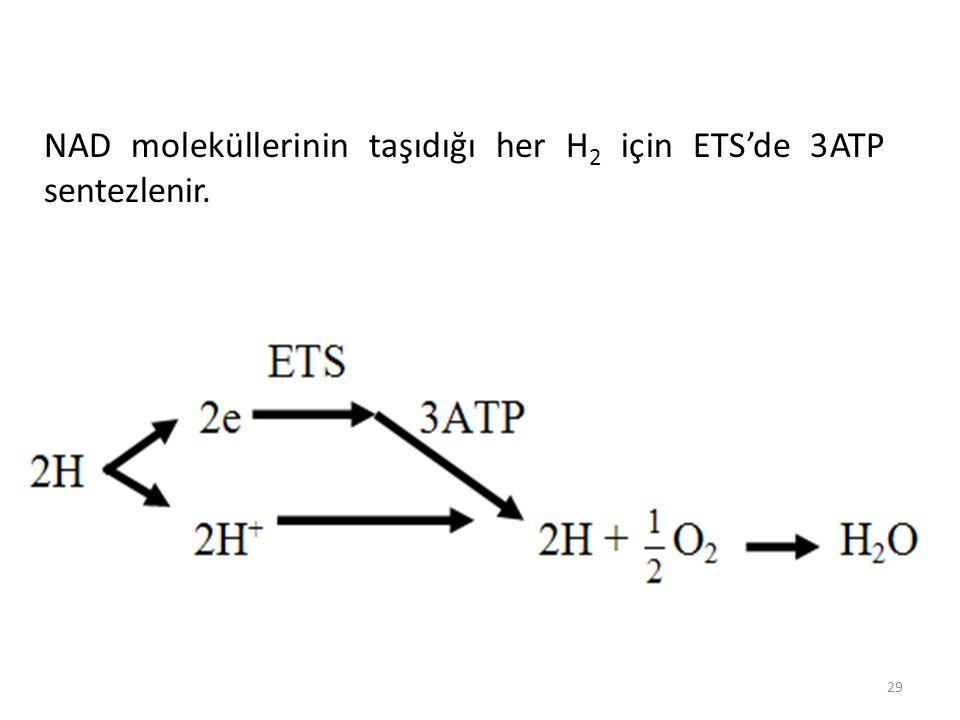 29 NAD moleküllerinin taşıdığı her H 2 için ETS'de 3ATP sentezlenir.