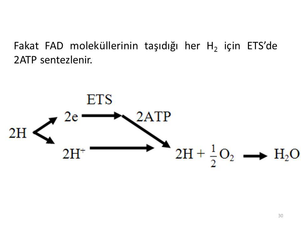 30 Fakat FAD moleküllerinin taşıdığı her H 2 için ETS'de 2ATP sentezlenir.