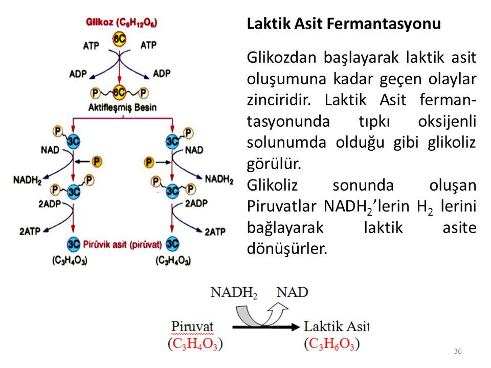 36. Laktik Asit Fermantasyonu Glikozdan başlayarak laktik asit oluşumuna kadar geçen olaylar zinciridir. Laktik Asit ferman- tasyonunda tıpkı oksijenl