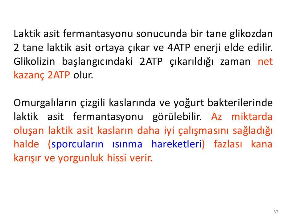37 Laktik asit fermantasyonu sonucunda bir tane glikozdan 2 tane laktik asit ortaya çıkar ve 4ATP enerji elde edilir.