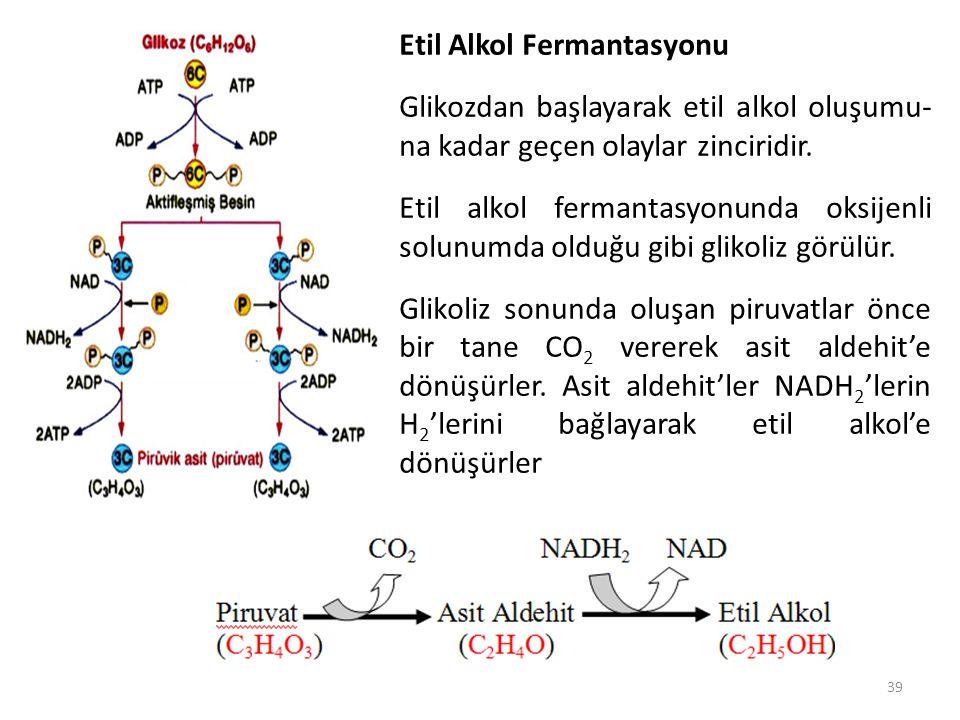 39. Etil Alkol Fermantasyonu Glikozdan başlayarak etil alkol oluşumu- na kadar geçen olaylar zinciridir. Etil alkol fermantasyonunda oksijenli solunum