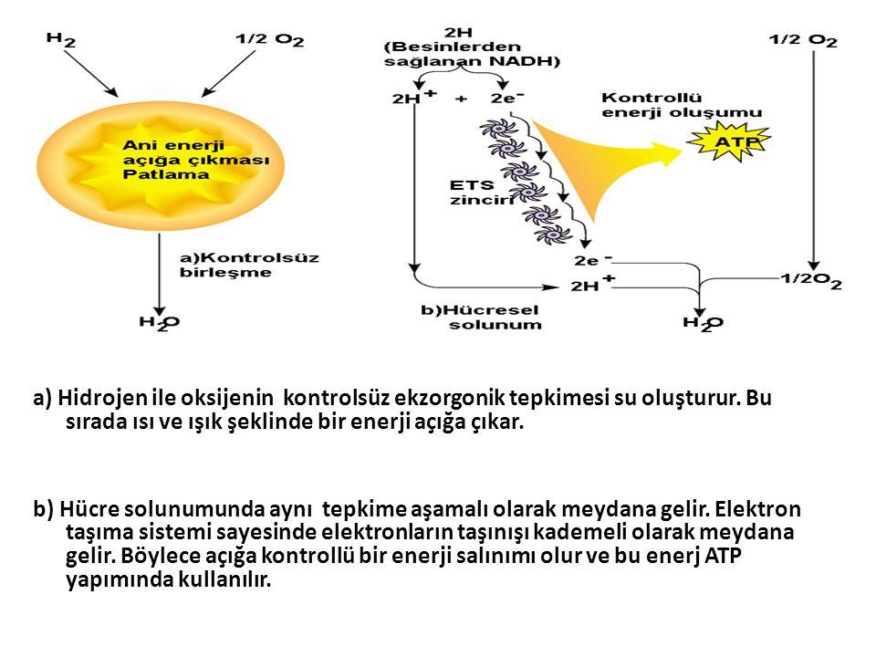 a) Hidrojen ile oksijenin kontrolsüz ekzorgonik tepkimesi su oluşturur.