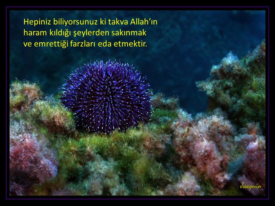 Hepiniz biliyorsunuz ki takva Allah'ın haram kıldığı şeylerden sakınmak ve emrettiği farzları eda etmektir.