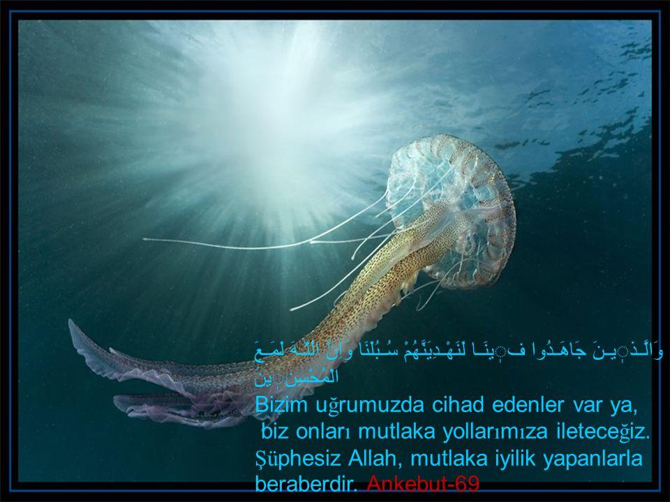 Allah'ın rızasını kazanmak için Allah yolunda ihlasla ve azimle çaba sarfetmek gerekir.