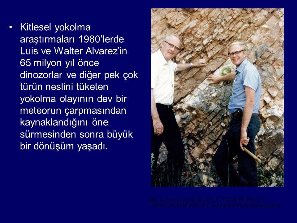 •Kitlesel yokolma araştırmaları 1980'lerde Luis ve Walter Alvarez'in 65 milyon yıl önce dinozorlar ve diğer pek çok türün neslini tüketen yokolma olay