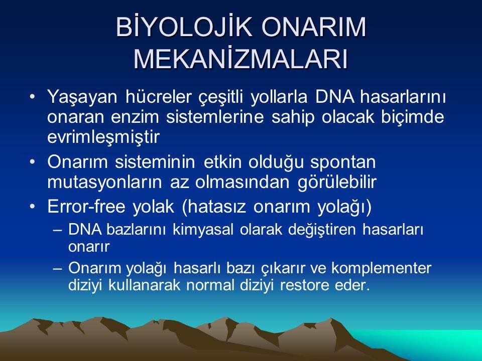 BİYOLOJİK ONARIM MEKANİZMALARI •Yaşayan hücreler çeşitli yollarla DNA hasarlarını onaran enzim sistemlerine sahip olacak biçimde evrimleşmiştir •Onarı